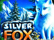 В Вулкане 24 автоматы Silver Fox
